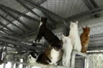 Meet Blind Cat Rescue & Sanctuary!