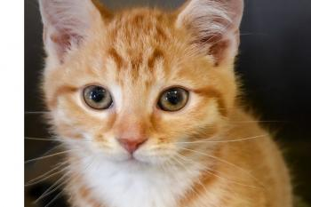 The Montgomery County Humane Society: Let's Be Humane Together