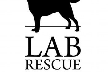 Lab Rescue LRCP CFC 2020